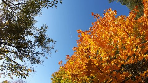 Plane In The Sky And Multicolored Nature On A Sunny Autumn Day. Slow Motion