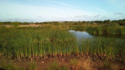 Small lake at Portugal Countryside - Vilamoura