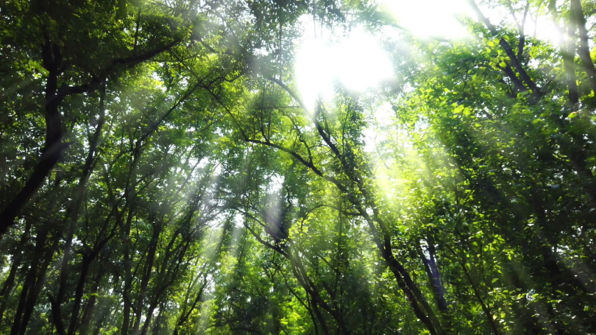 Walking in the forest with bright light. | Shutterstock HD Video #1038902039