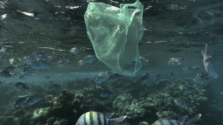 Slow motion, old used yellow plastic bag slowly drifts under surface of water near with school of tropical fish Indo-Pacific sergeant or Sergeant major (Abudefduf vaigiensis), on coral reef background | Shutterstock HD Video #1038940370
