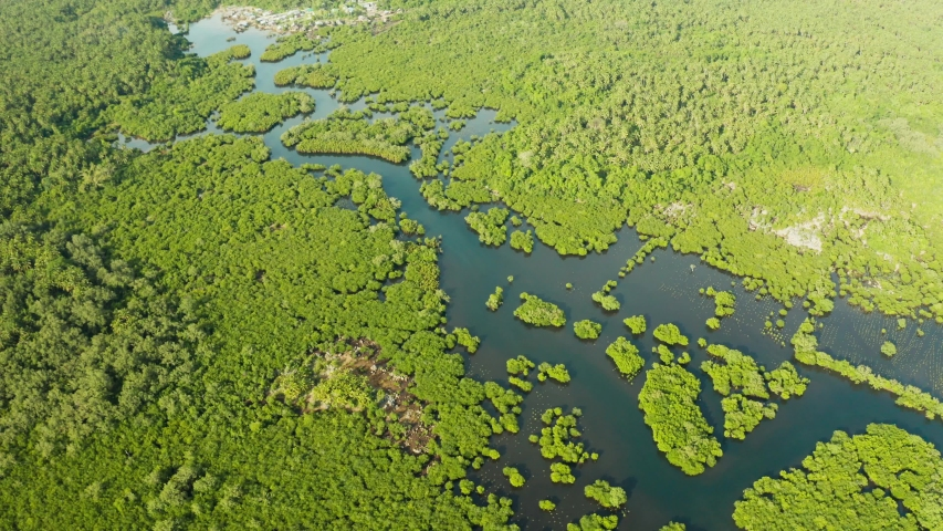 Mangroves with rivers in the Philippines. Tropical landscape with mangroves and islands. Coast of the island of Siargao. | Shutterstock HD Video #1038945131