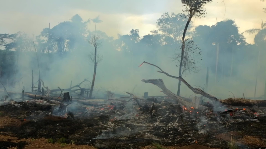 Amazon rainforest trees on fire with smoke in illegal deforestation to open area for agriculture. Concept of deforestation, environmental damage, climate change and global warming. Para state, Brazil. Royalty-Free Stock Footage #1039132475