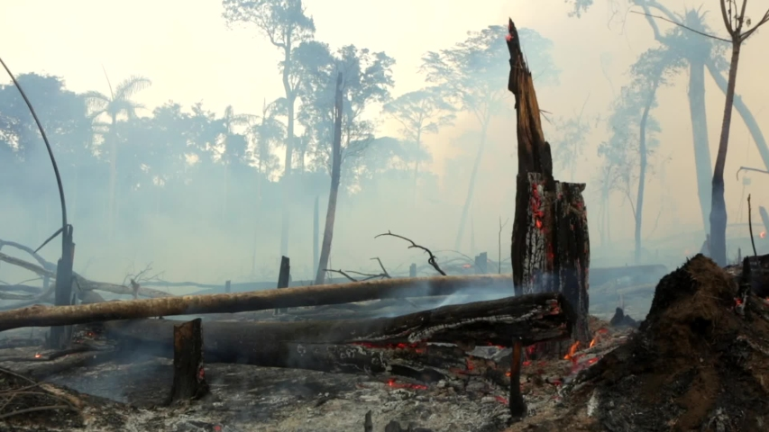Amazon rainforest trees on fire with smoke in illegal deforestation to open area for agriculture. Concept of deforestation, environmental damage, climate change and global warming. Para state, Brazil. | Shutterstock HD Video #1039132487