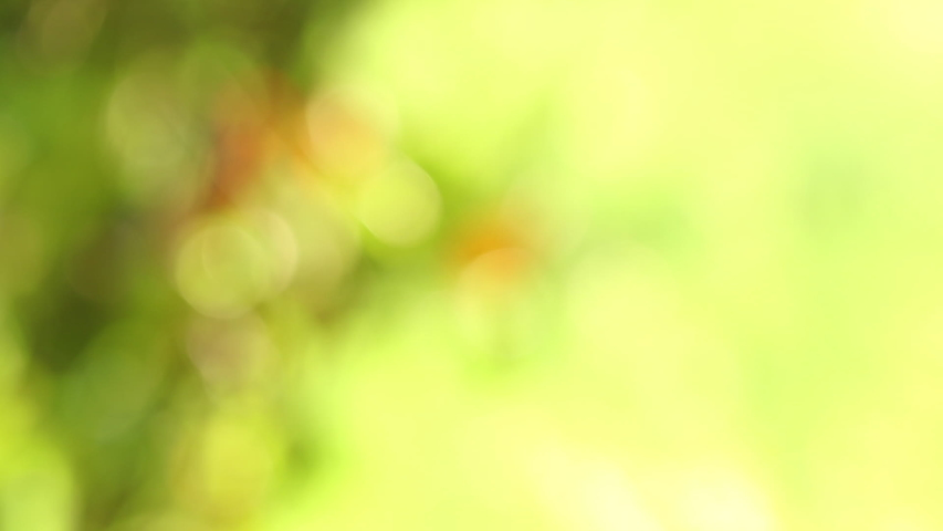 Abstract blurred green leaf for background and texture. Used as a title for introduce or footage work. Presentation wallpaper concept. | Shutterstock HD Video #1039194371