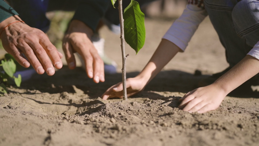 The child and adult hands planting a tree. slow motion #1039207886