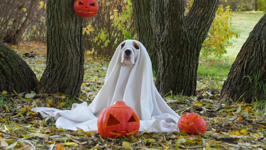 Dogs in Ghost Halloween Costumes image - Free stock photo - Public Domain photo - CC0 Images