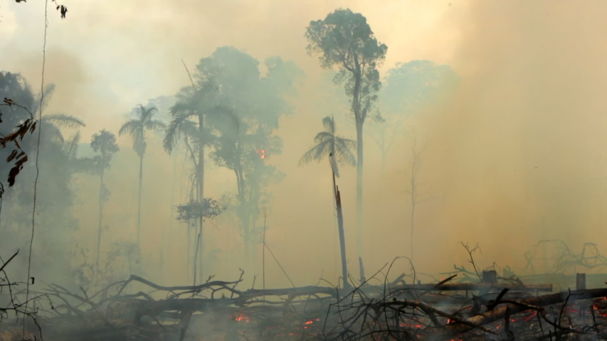 Amazon rainforest trees on terrible fire with smoke and flying dust. Illegal deforestation to open area for agriculture. Concept of deforestation, climate change and global warming. Para, Brazil. | Shutterstock HD Video #1039282796