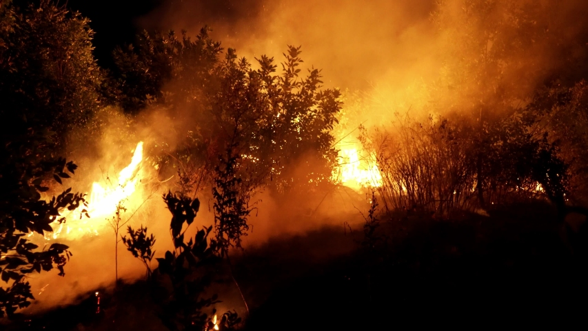 Forest fire. Fire destroys trees and forest animals. Australia. Fires in the forests of the Amazon and Siberia. Catastrophe. Green lungs of the planet. Destroyed flora and fauna. Global warming. | Shutterstock HD Video #1039358090