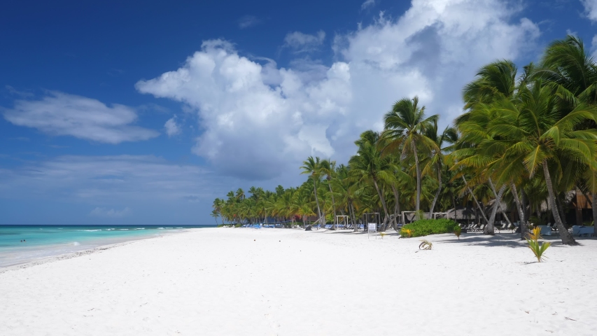 Coconut palm trees on white sandy shore on caribbean island. Travel destinations. Summer vacations   Shutterstock HD Video #1039381832