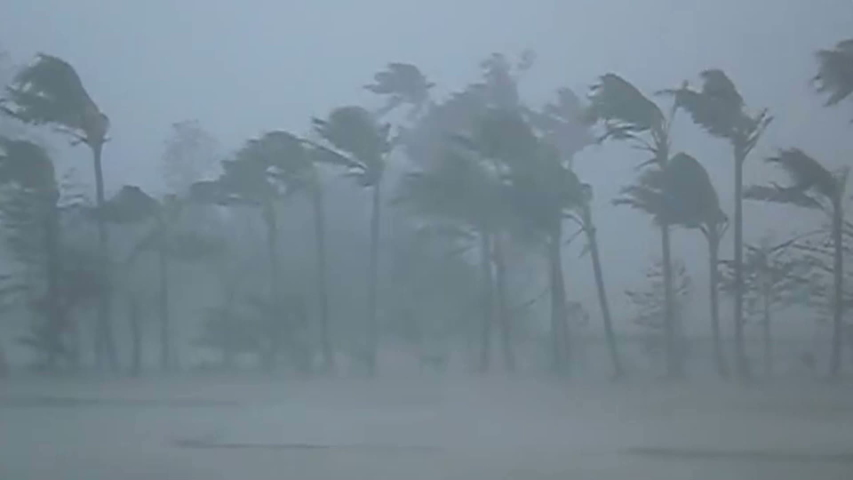 Hurricane Extremely Strong Wind and Heavy Rain Breaking Trees, Super Typhoon part5