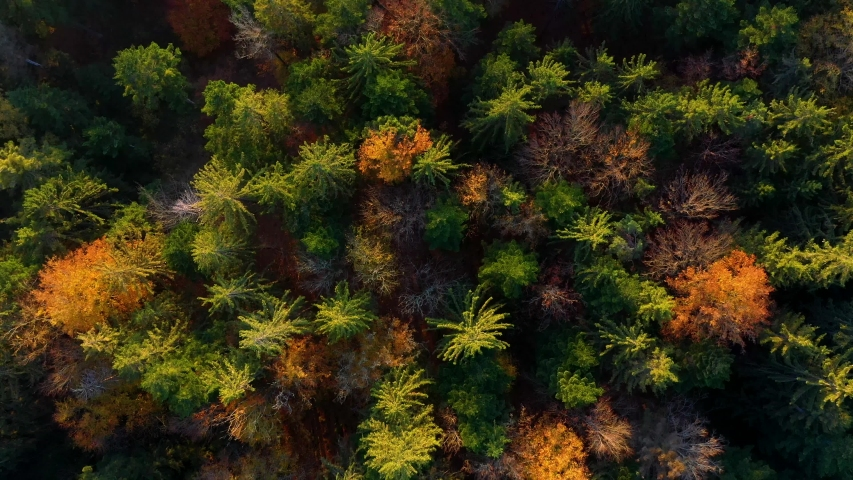 Flight over european forest vertical view from above in autumn