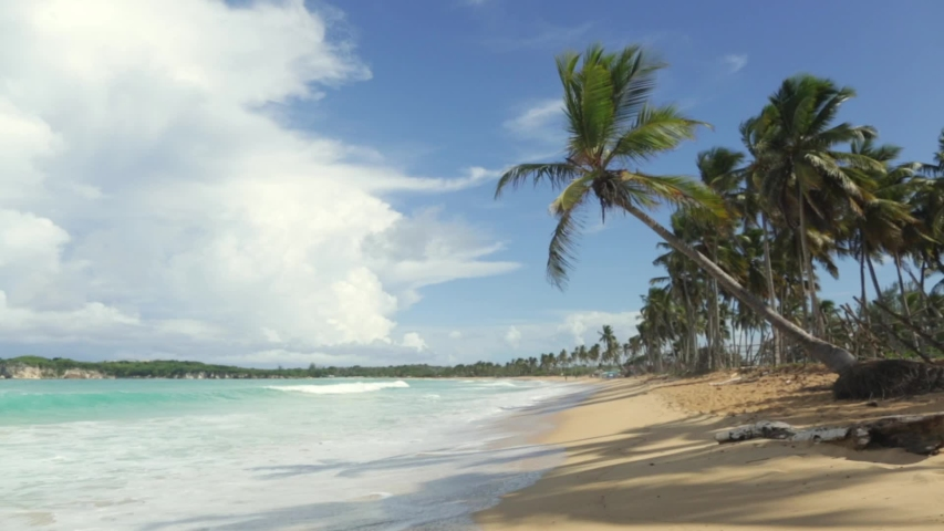 Palm tree hanging on a beautiful wild beach with turquoise water. Amazing summer travel vacation beach background. Atlantic Ocean, beaches of Dominican Republic Punta Cana #1039811987