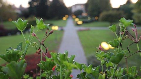 the park, wide view, flower street light