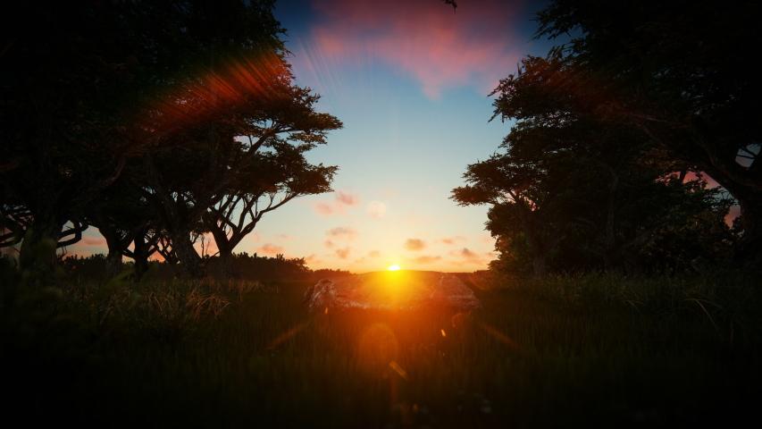 Dark forest against beautiful sunset, 4K   Shutterstock HD Video #1039960700
