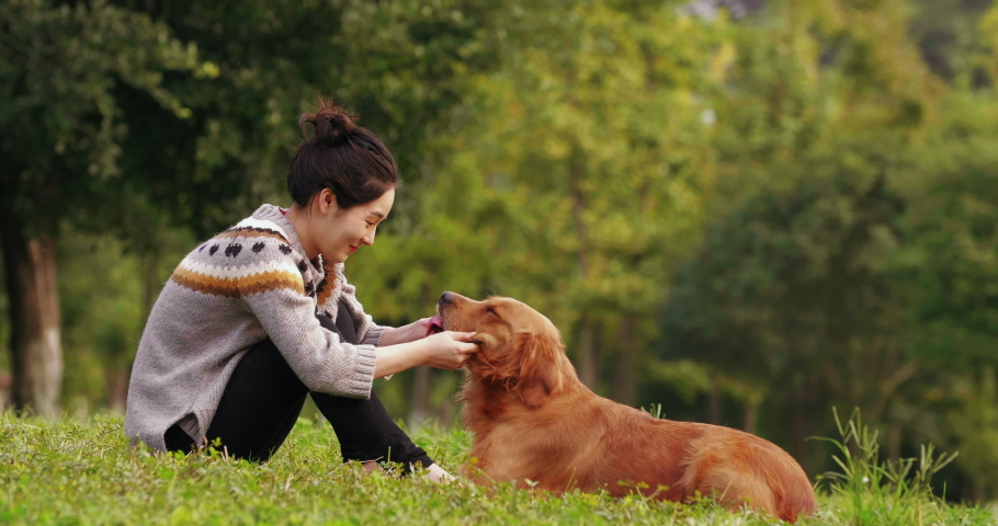 Side view of happy asian girl sitting on the lawn face to face playing with her golden retriever dog outdoor in the autumn park people happy joyful doggy lifestyle with pet dog lovely animal together | Shutterstock HD Video #1040004431