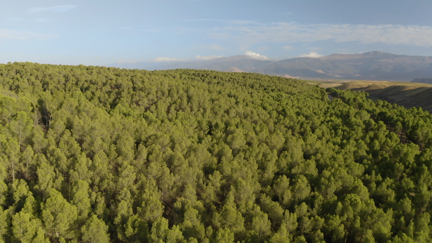Aerial drone view of big green dense forest in countryside in desert with green vegetation and mountains in Andalusia. Blue sky, Almeria, Spain. During the day. Trees 4K UHD. Cinematic Slow Shot.