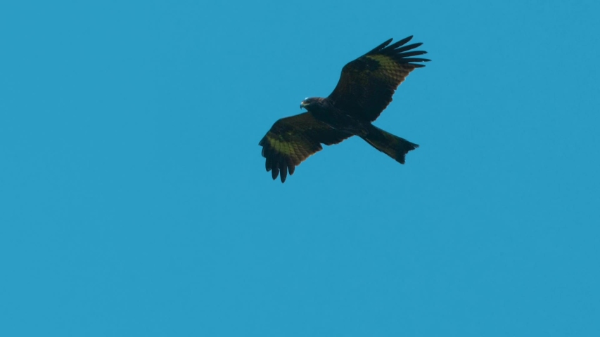 Bird in flight in the sky