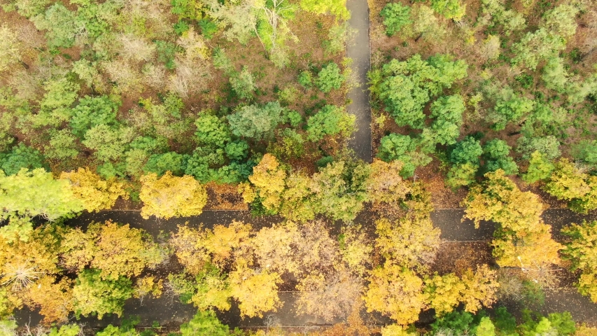 Video by dron above the wood park. Different colors of leaf. Autumn in east Europe.