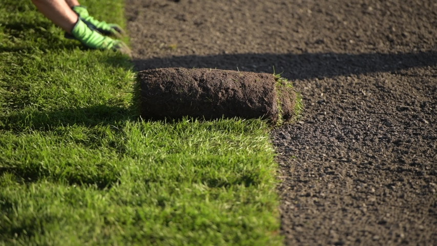 Roll of New Natural Grass Turf Installed by Professional Gardener. Landscaping Industry. | Shutterstock HD Video #1040289422
