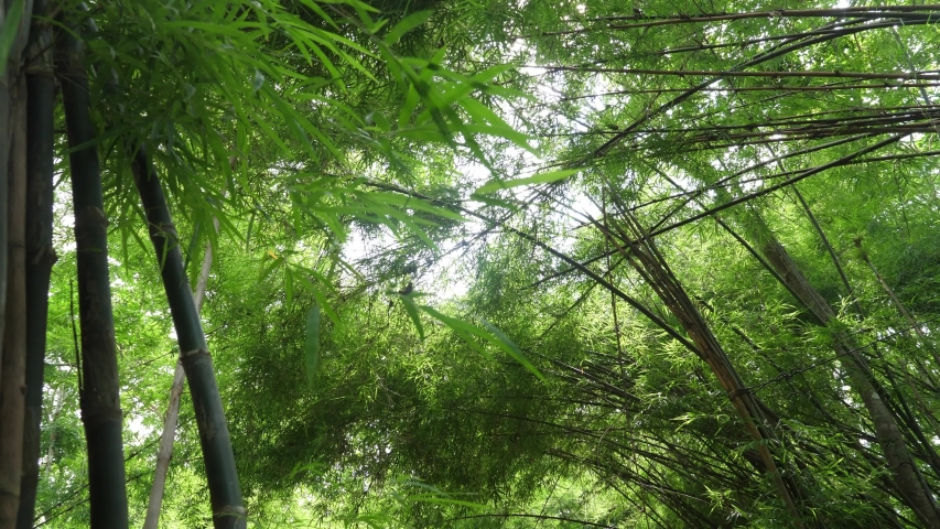 Bamboo leaves background with copy space. nature concept. | Shutterstock HD Video #1040318369
