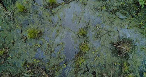 Aerial view of dron flies over marshland with sparse thickets moss and trees and shrubs on a sunny autumn day. Concept of rugged places in the wild