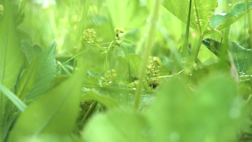 Close up of fresh spring grass swaying in the wind. Stock footage. Juicy natural background with green plants in the meadow. #1040349704