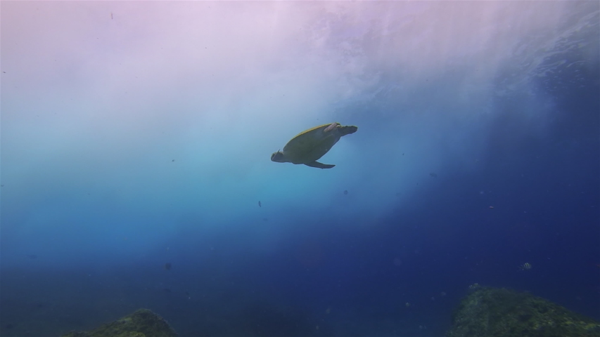 Sea Turtle. Green Turtle Swimming To Dramatic Sunlit Sea Surface & Waves On Beautiful Colourful & Peaceful Rocky Coral Reef In Blue Sea Water. Graceful Aquatic Marine Turtle & Marine Life Underwater