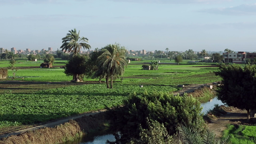 An agricultural land in countryside in front of pyramids, pan right, Egypt. In 2000, agriculture accounted for 17% of Gross Domestic Production and 34% of total employment of Egypt. Royalty-Free Stock Footage #1040469827
