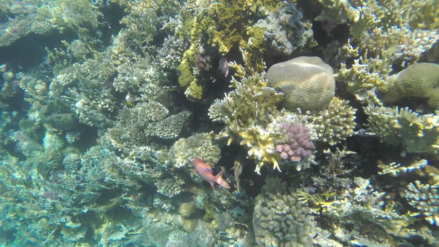 Red fish hiding in a coral reef | Shutterstock HD Video #1040839418