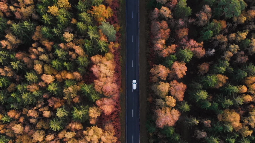 Aerial View Above Road in Forest in Fall With Cars. Aerial Top View Over Straight Road With Cars in Colorful Countryside Autumn Forest. Fall Orange, Green, Yellow, Red Leaves Trees Woods.