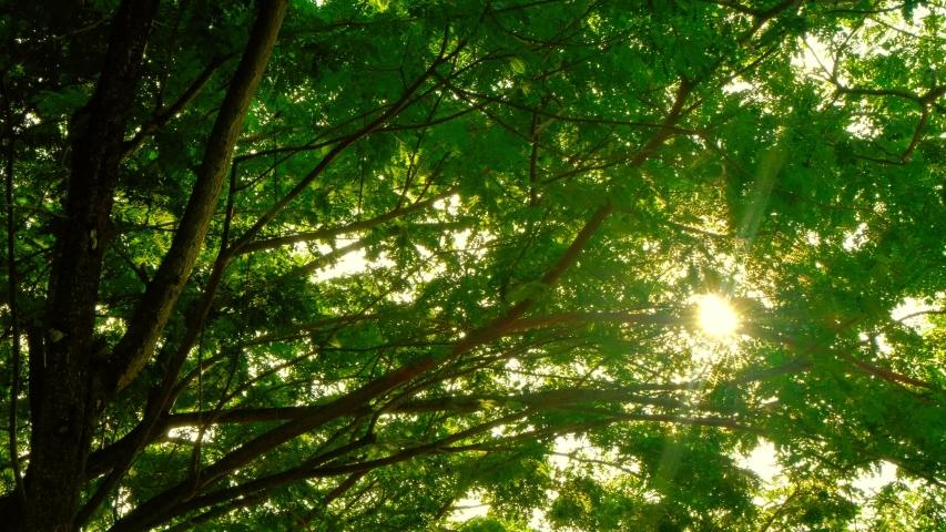 Beautiful Sun's rays through tops of trees, sun shines through foliage. POV view. | Shutterstock HD Video #1041015233