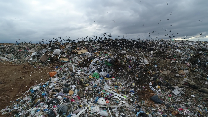 Black birds flocks over the garbage dump. A huge garbage mountain of unsorted waste. Landfill. Trash polygon. Aerial view.