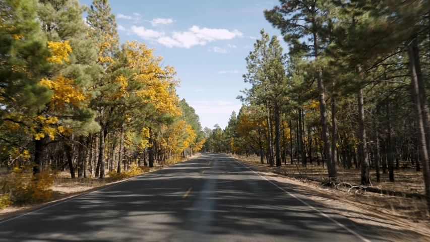 Driving on empty asphalt road with yellow markings passing through a mixed forest with pines and trees with yellow foliage on a sunny autumn day. In Grand Canyon national park, pov from the car