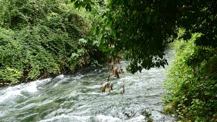 river in the forest , video clip footage, in dolomiti mountains river in italy