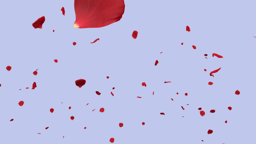 Festive background with many gentle red roses petals falling down slowly on blue | Shutterstock HD Video #1041255067