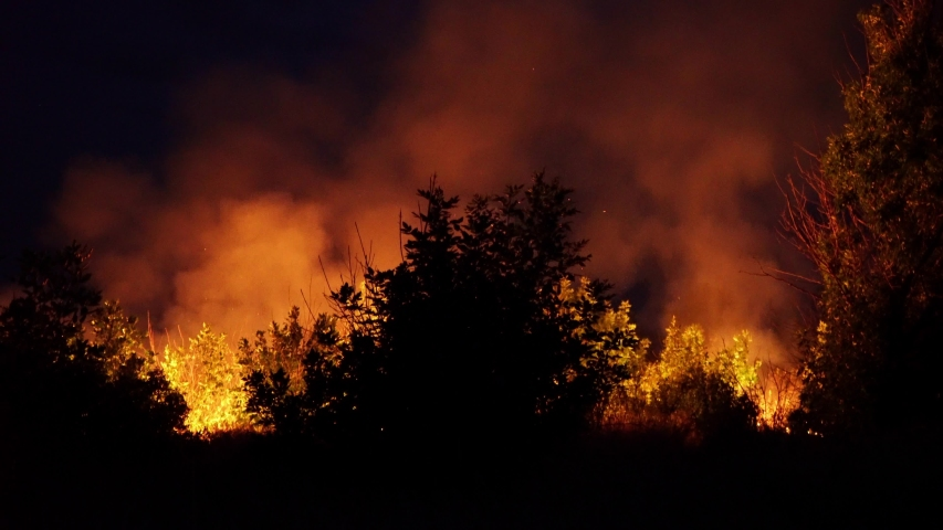 Forest fire. Fire destroys trees and forest animals. Australia. Fires in the forests of the Amazon and Siberia. Catastrophe. Green lungs of the planet. Destroyed flora and fauna. Global warming. | Shutterstock HD Video #1041385195