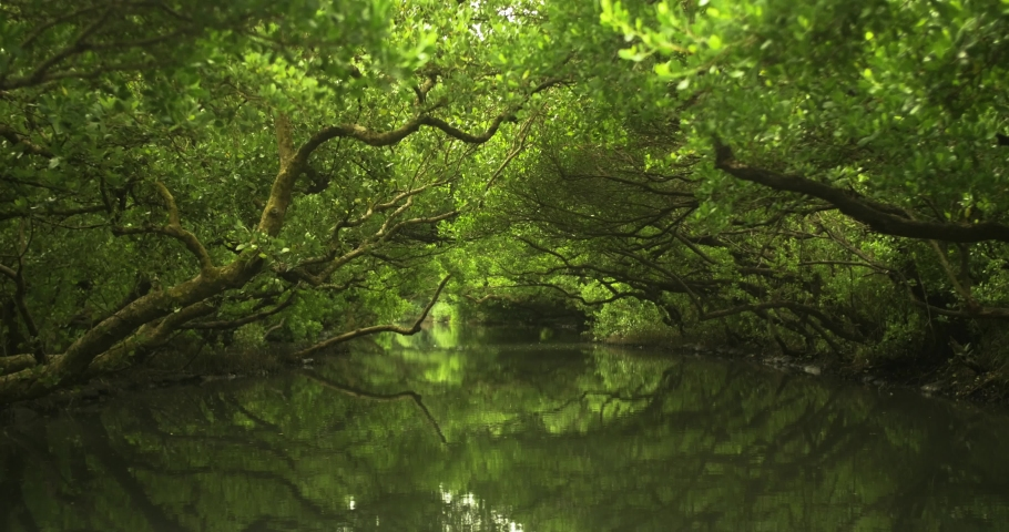 Mangrove jungle river with reflections. Sicao Green Tunnel in Taijiang National Nature Park, Tainan, Taiwan. Beautiful, calm, relaxing and scenic environment. Taiwanese tourist destination. | Shutterstock HD Video #1041469681