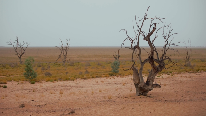 Death trees and dry vegetation in a dry lake in Australia | Shutterstock HD Video #1041472336