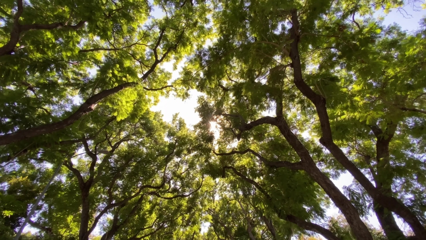 Camera looks up and moves slowly under trees. Tree branches and leaves against blue sky. Warm summer day in los angeles california USA | Shutterstock HD Video #1041636109
