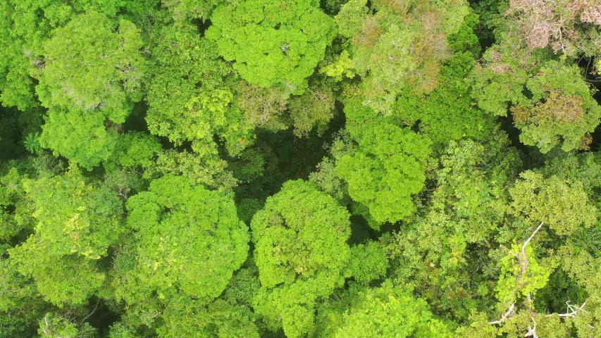 Aerial view of a green rainforest foliage, Congo Basin. Odzala National Park, Republic of Congo. | Shutterstock HD Video #1041667807
