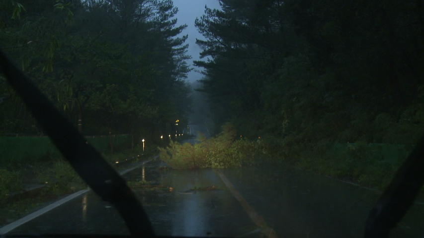 Tree Blocks Road After Hurricane Hits With Strong Wind - Danas | Shutterstock HD Video #1041824296