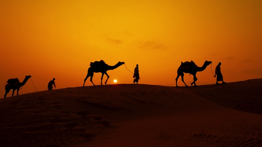 Cameleers, camel Drivers at sunset in slow motion. Thar desert on sunset Jaisalmer, Rajasthan, India.