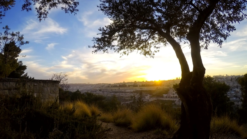 Sunset timelapse over the Old City of Jerusalem, with olive tree in the foreground