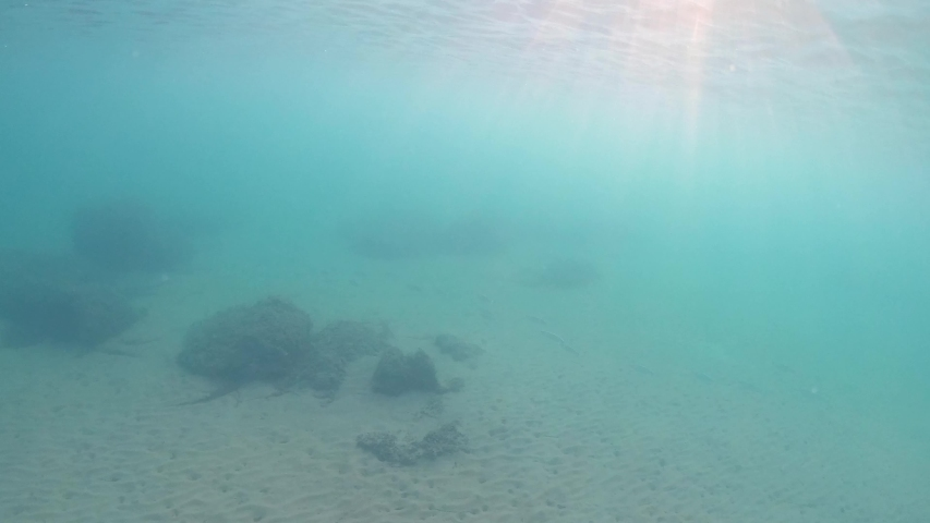 Fish swims in blue water. Underwater shoal of small fish between water surface and sandy seabed, Ionian sea. Sunlight, Sun beaming through the surface of green water | Shutterstock HD Video #1042227844