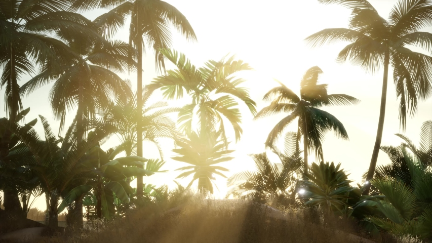 Silhouette coconut palm trees at sunset | Shutterstock HD Video #1042363198