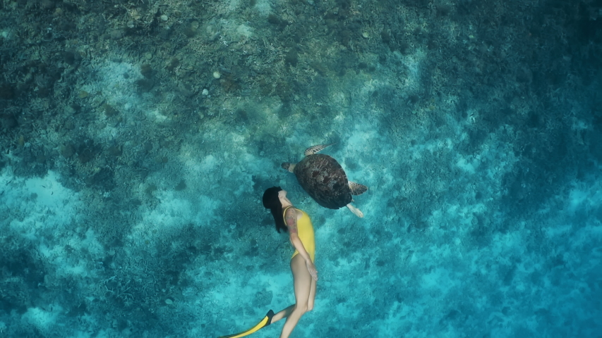 Snorkeling lovely asian girl and turtle are swimming together. Freediver and contact with animals. The footage was shot with a professional underwater camera in super slow motion mode.
