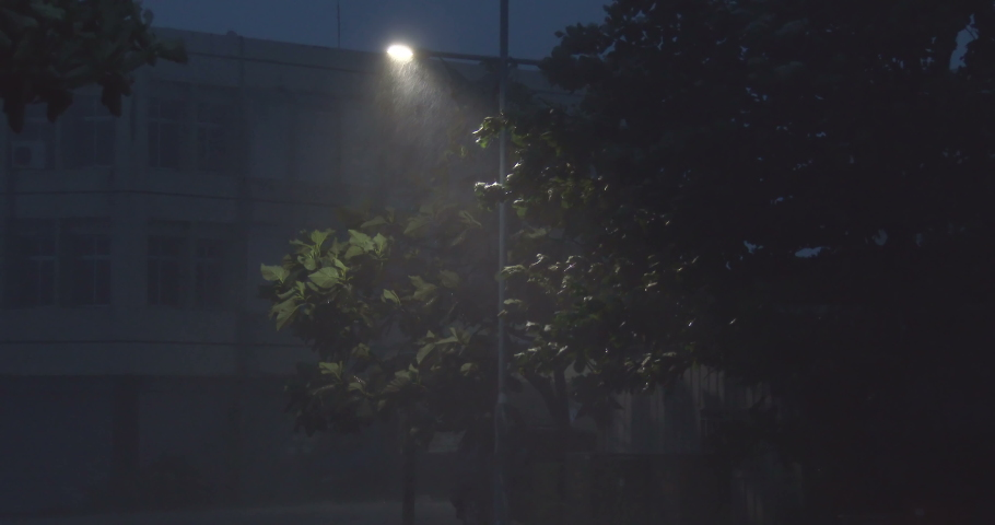 Strong Hurricane Winds Hit City At Night Trees Sway Under Street Light - Matmo