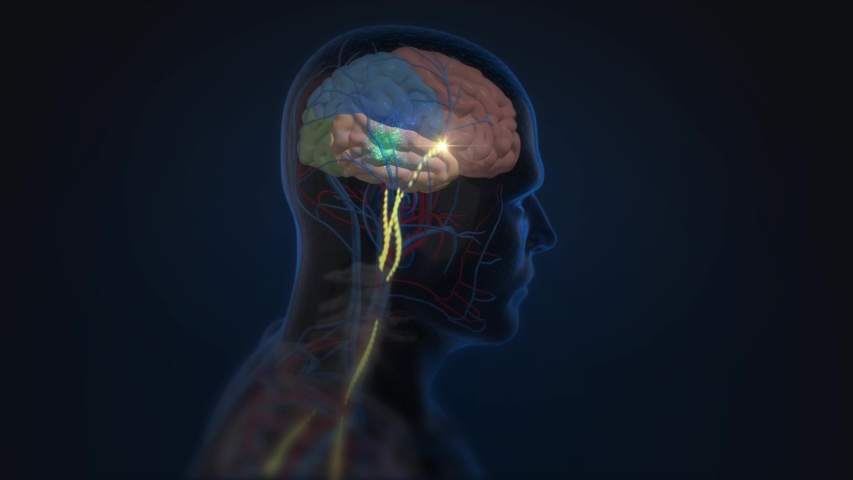 3d Animation of dopamine and serotonin release from the nervous system into the brain causing a chemical change