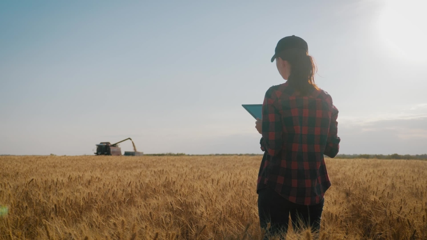 Farmer woman with tablet working in wheat field during harvesting by a combine, she controls the harvesting process. The girl uses a tablet, plans to harvest. Concept of technology in agriculture