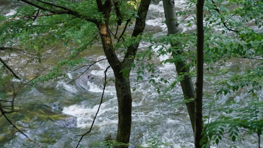 Wissahickon Creek flows over stones behind trees   Shutterstock HD Video #1042881715